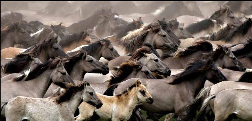 Horse Whispering – Herd Mentality