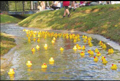 Whose Duck Will Be The Quickest Quacker?