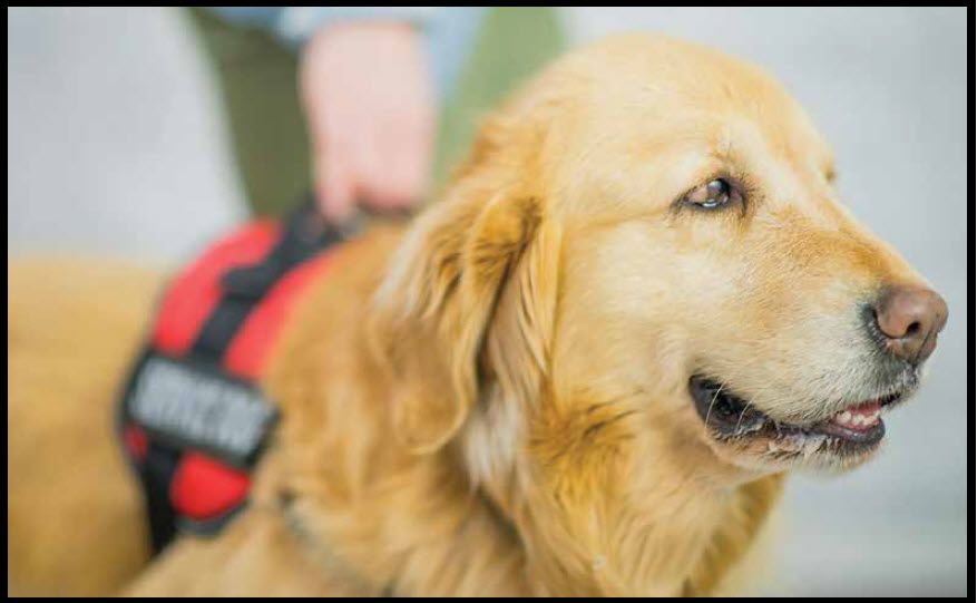 The New Alabama Legislative Law Regarding Service Dogs