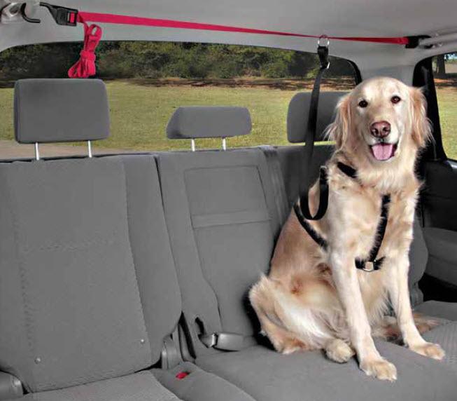 Holidays And Travel – Dog Barker