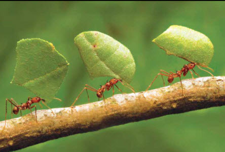 """Jerry's Journal – The """"Ant Solution"""" To A Happier Life"""