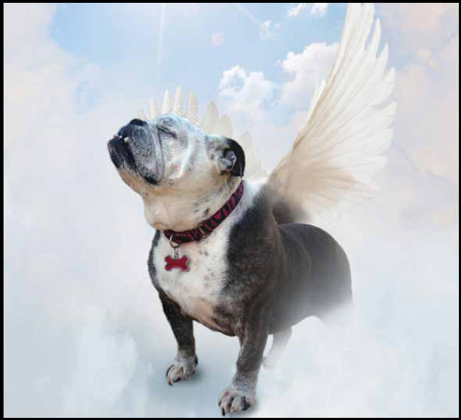 All God's Dogs Going To Heaven